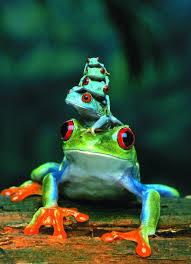 amazon com eurographics eyed tree frog 1000 puzzle
