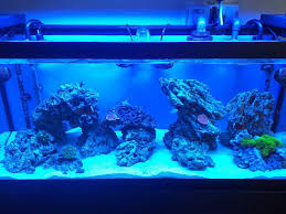 Reef Aquascape Post Your Modern Aquascape Reef Central Online Community