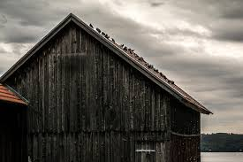 How To Make A Shed Out Of Wood by How To Keep Birds Out Of Garages U0026 Sheds Bird Control