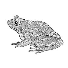 free frog coloring coloring frogs animal