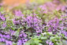 rural scenery beautiful flower garden stock photos 4 002 images