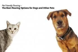 pet flooring the best flooring options for dogs