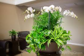 home interiors with plants home interiors