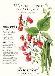 botanical sts scarlet emperor runner pole bean seeds 25 grams