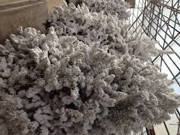 amazing flocked tree clearance white sales