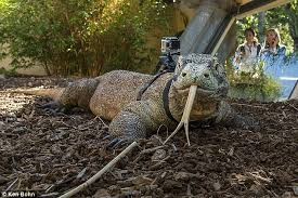 Seeking Episode 1 Lizard How To Your Komodo The Lizard Wears A Gopro
