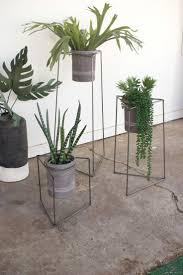 59 best indoor plants aspirational images images on pinterest