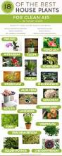 18 of the best indoor house plants to help purify the air u0026 detox