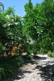 garden u2013 chica andaluza