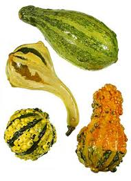 the nibble squash types