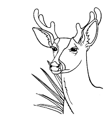 redoubtable deer head coloring pages 10 deer head outline clipart