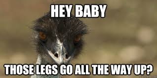 Ostrich Meme - hey baby those legs go all the way up creepy ostrich quickmeme