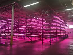 how does light affect plant growth how limiting factors affect plant growth illumitex led and