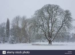 large tree stands in the middle of snow covered field during cold