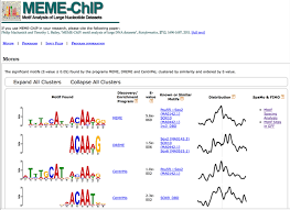 Meme Chip - chip seq functional analysis in depth ngs data analysis course