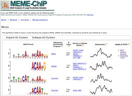 Meme Motif - chip seq functional analysis in depth ngs data analysis course