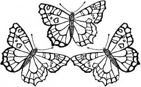 monarch butterfly coloring pictures print pages free