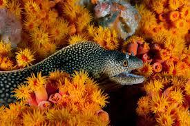 underwater pictures capture life inside world u0027s newest marine