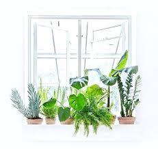 plante verte dans une chambre plantes interieur depolluante mais il combine trois vertus des