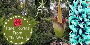 world u0027s most beautiful and rarest flower species top best