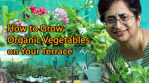 How To Grow Vegetables by How To Grow Organic Vegetables Terrace Garden Youtube