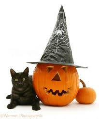 halloween background cat and pumpkin black smoke cat at halloween photo wp14825