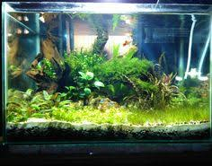 Diy Aquascape The Project Making Filters At Home Might Sound A Tricky Task But