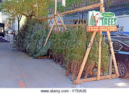 vendors selling christmas trees on the streets of new york stock