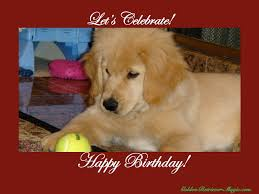 dog birthday pa happy compare prices little images free litle pups