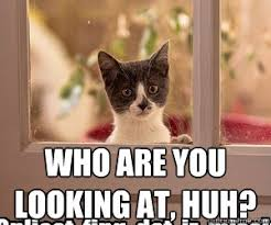 Hi Memes - who are you looking at huh say hi to my cat quickmeme