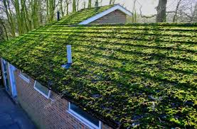 nu look home design employee reviews should i be worried about moss on my roof nu look home design
