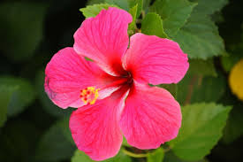 picture of tropical flowers bbcpersian7 collections