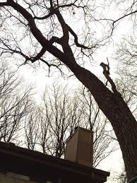 american arborist call american arborist for your tricky tree