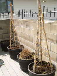 building a cucumber trellis cucumber trellis cucumber and gardens