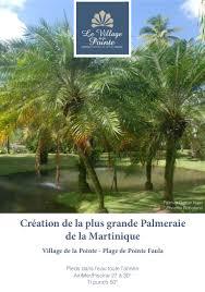 palmier du chili création de la plus grande palmeraie de la martinique à la pointe fau u2026