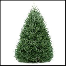 live christmas tree fraser fir live christmas tree christmas tree shop