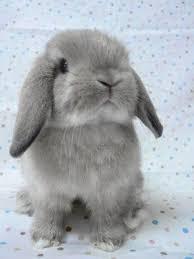 25 rabbits ideas bunny rabbit bunny pet