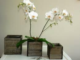 unique indoor planters wooden planters indoor u2014 biblio homes unique wooden planters for