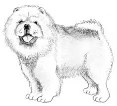 dog sketches pencil drawings dogs