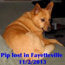 Arkansas traveling with pets images 67 best arkansas us lost dog registry images jpg
