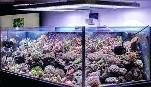 aquarium lights for sale aquarium light aquarium led lights for sale sportymom me