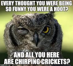 Funny Owl Meme - wtf owl imgflip