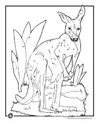 realistic kangaroo coloring page woo jr kids activities