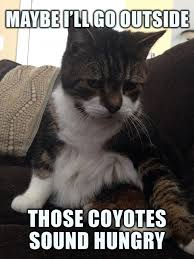 Depressed Guy Meme - hopelessly depressed cat feeling a bit suicidal today meme guy