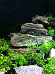 Japanese Aquascape by Aquascape Nano Aquarium With Shrimps Aquariums Pinterest
