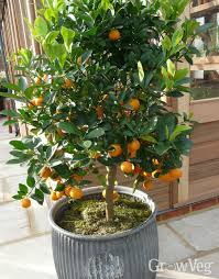 Fruit Garden Ideas Garden Design Ideas Using Fruit