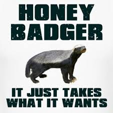 Honeybadger Meme - honey badger honey badger hilarious memes and honey
