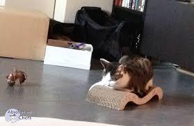 eviter griffes canapé pourquoi le se fait les griffes absolument chats