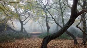forest glade mystique 2