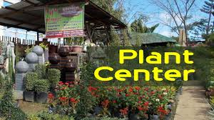 garden center flower shop decorative plants philippines